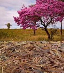 パウダルコ 花 樹皮