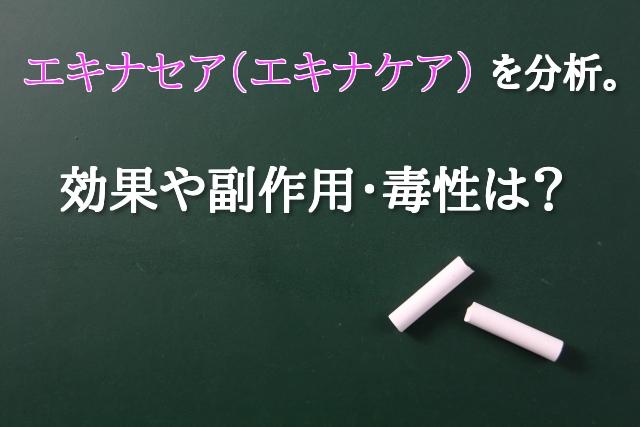 エキナセア(エキナケア)風邪 免疫力